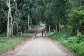 BR Hills, India